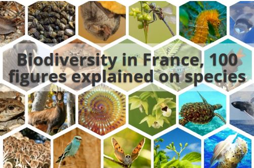 Biodiversity in France - 100 figures explained on species (2019)