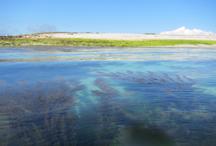Habitats marins de mer d'Iroise © INPN – P. Gourdain