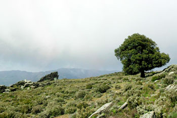 Monte Castellare © INPN - Arnaud Horellou
