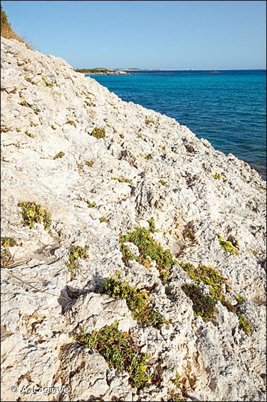 1240-1 - Végétation des fissures des falaises calcaires - Cahiers d'habitats