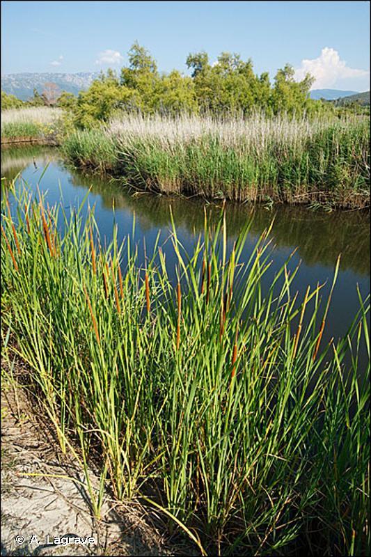 24.16 - Cours d'eau intermittents - CORINE biotopes