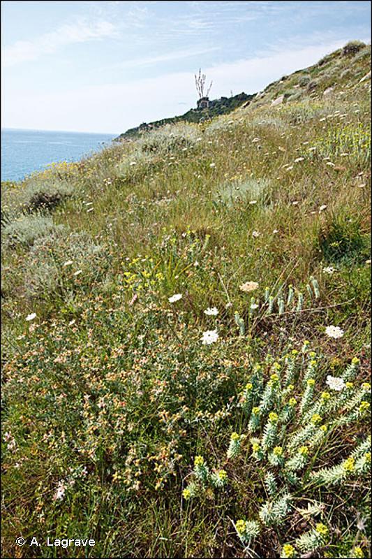 33.13 - Phryganes du Cap Corse - CORINE biotopes