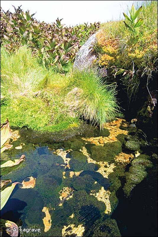 D2.2C1 - Communautés bryophytiques des sources d'eau douce - EUNIS