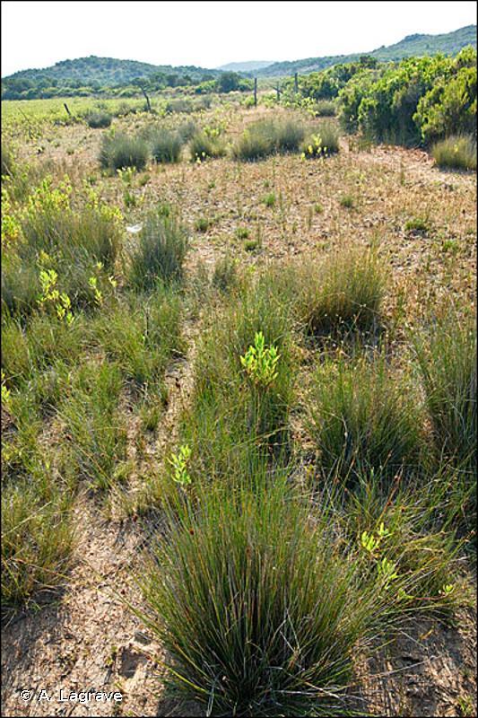 54.2 - Bas-marais alcalins (tourbières basses alcalines) - CORINE biotopes