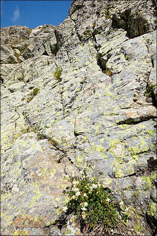62.24 - Falaises des montagnes cyrno-sardes - CORINE biotopes