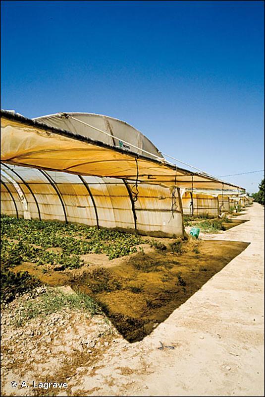 86.5 - Serres et constructions agricoles - CORINE biotopes