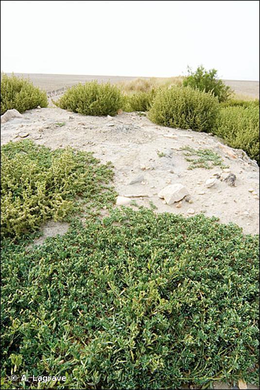 87.2 - Zones rudérales - CORINE biotopes