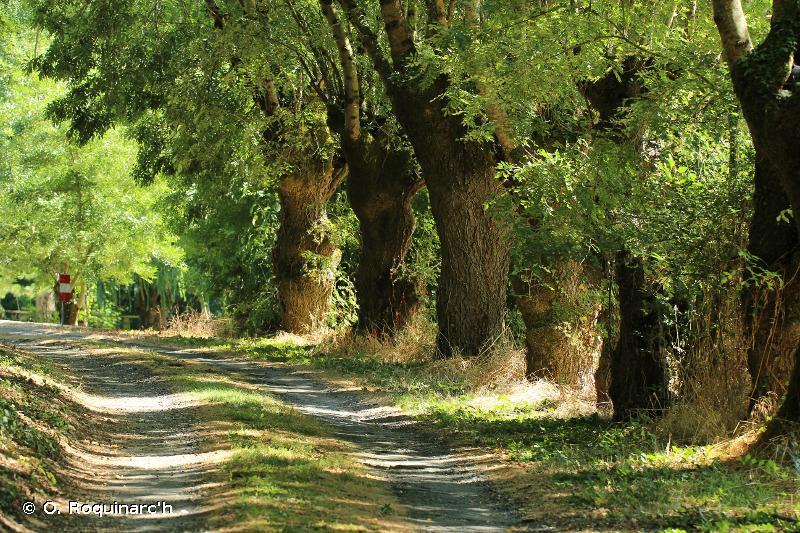 G5.1 - Alignements d'arbres - EUNIS