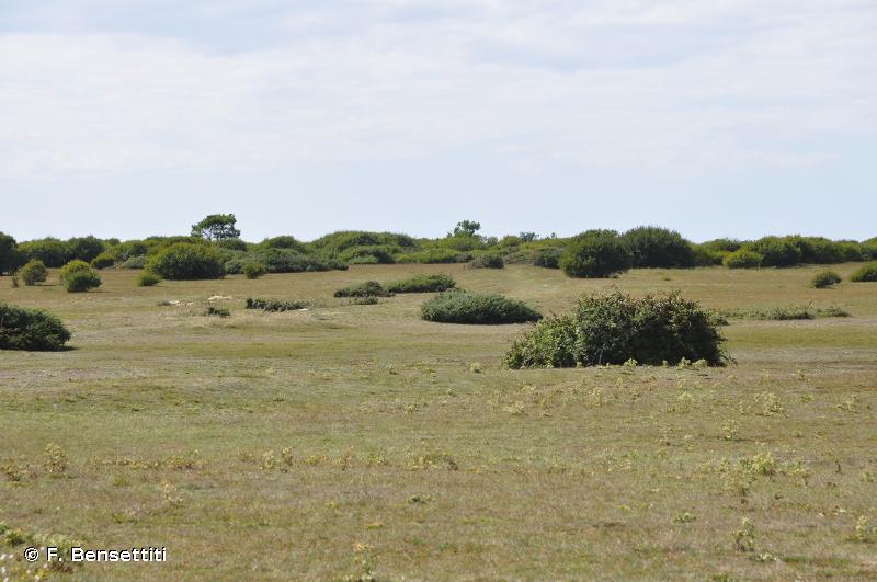 2180 - Dunes boisées des régions atlantique, continentale et boréale - Habitats d'intérêt communautaire