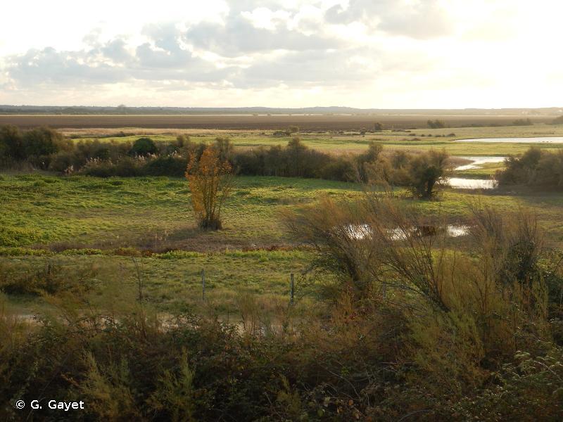 Marais du Nord Médoc