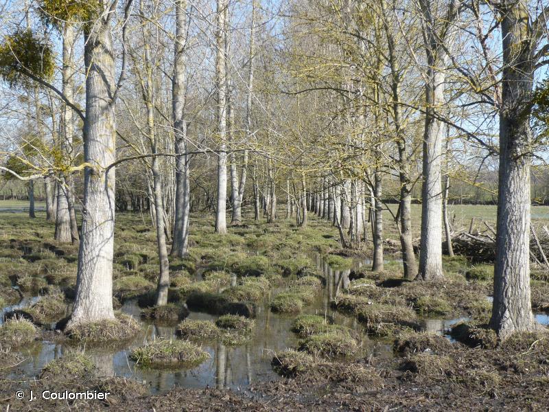 Vallée de la Charente en amont d'Angoulêmes
