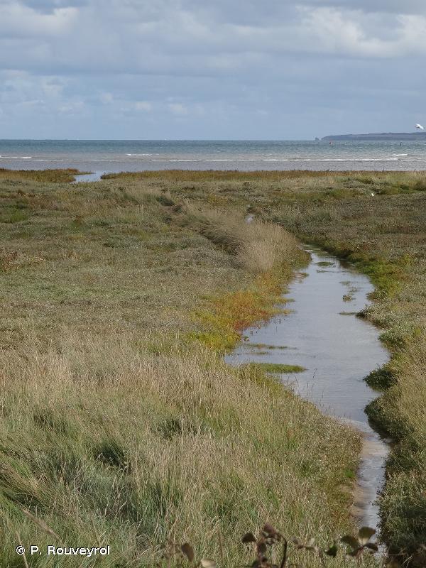 Marais du Cotentin et du Bessin - Baie des Veys