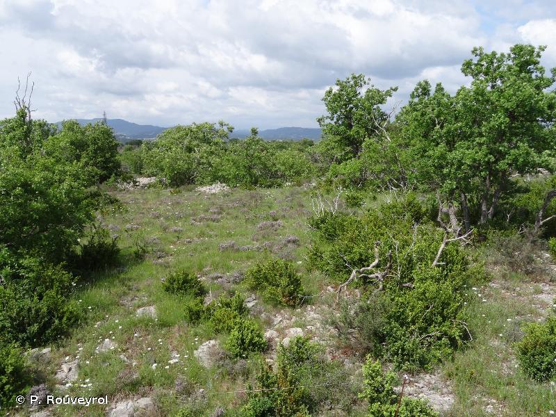 Moyenne vallée de l'Ardèche et ses affluents, pelouses du plateau des Gras
