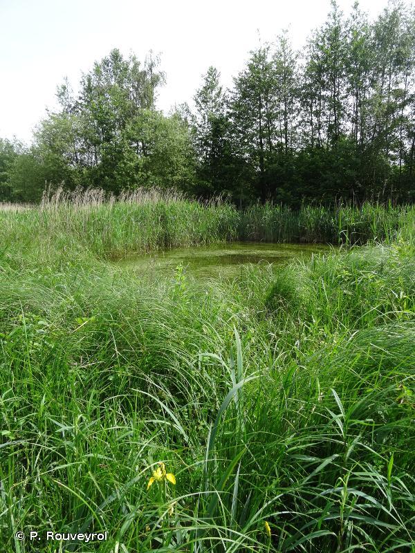 Bois de Vaires-sur-Marne