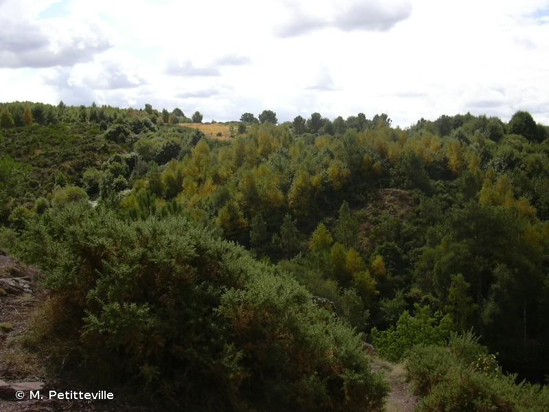 FORET DE PAIMPONT