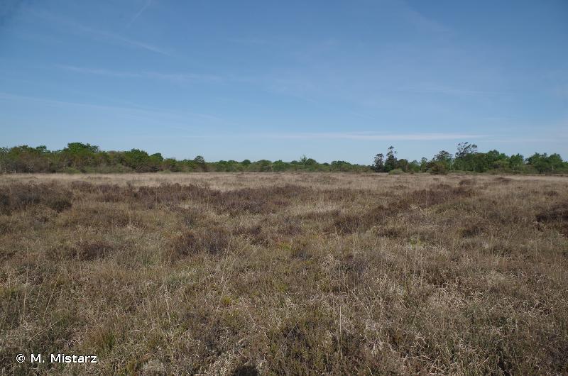 4020 - Landes humides atlantiques tempérées à <em>Erica ciliaris</em> et <em>Erica tetralix</em> - Cahiers d'habitats