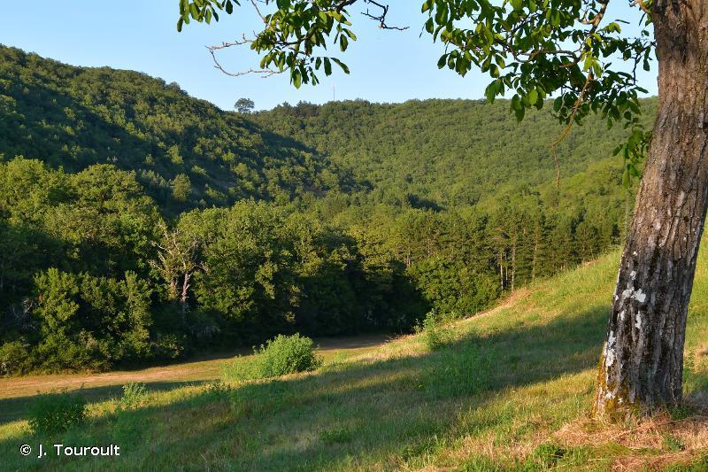 Bois et pelouse de La Grèze, Pech Ginibre et Combe Cave, cours du Céou à Pont-de-Rhodes
