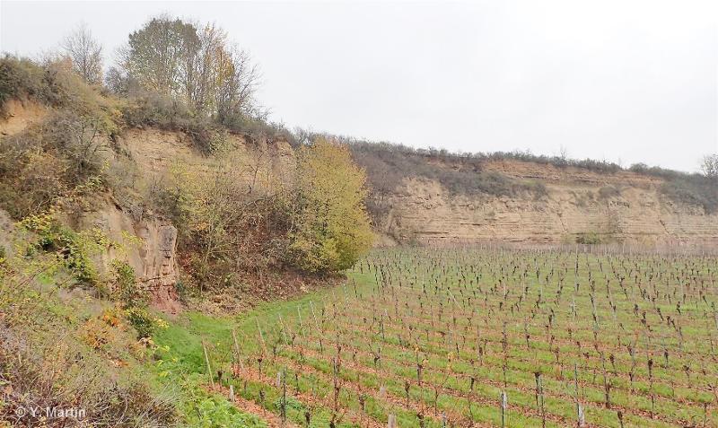 Pelouse du Scharrach à Scharrachbergheim, pelouses et carrières royales du Silberberg à Wolxheim et Dahlenheim