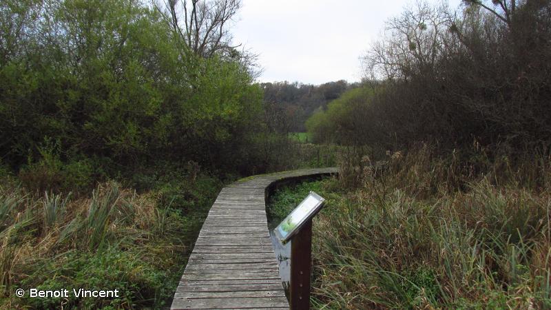 Vallée du Rognon, de Doulaincourt à la confluence avec la Marne