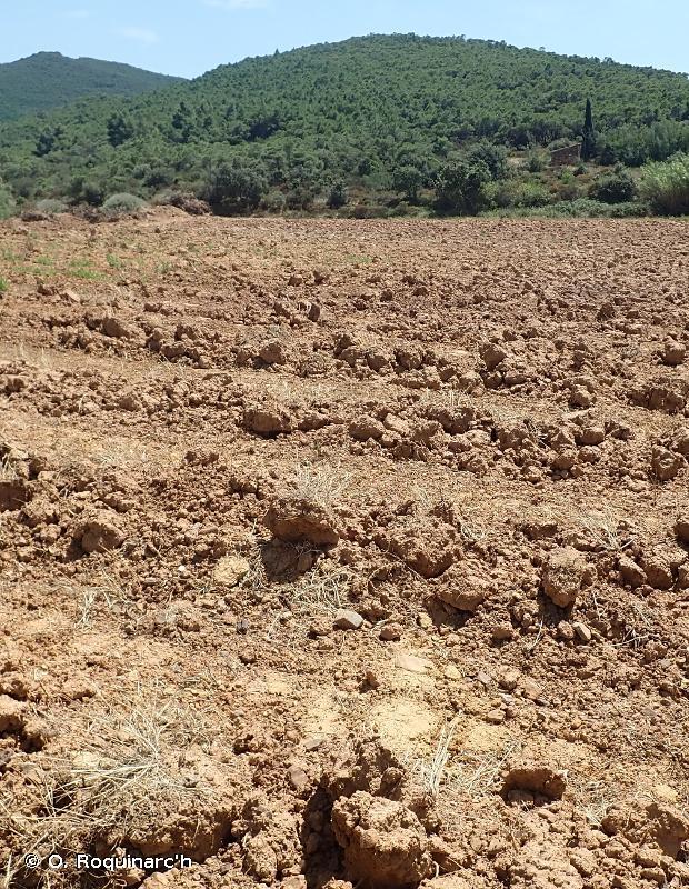 I1.51 - Terres labourées nues - EUNIS