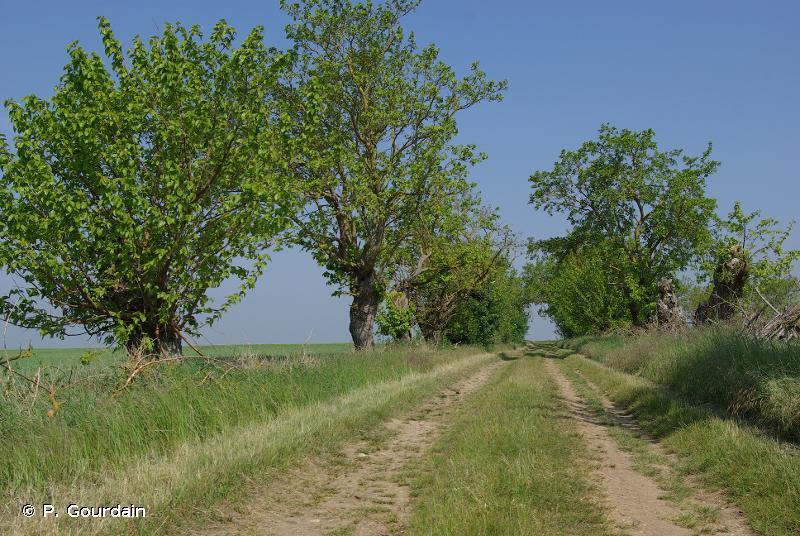 G - Boisements, forêts et autres habitats boisés - EUNIS
