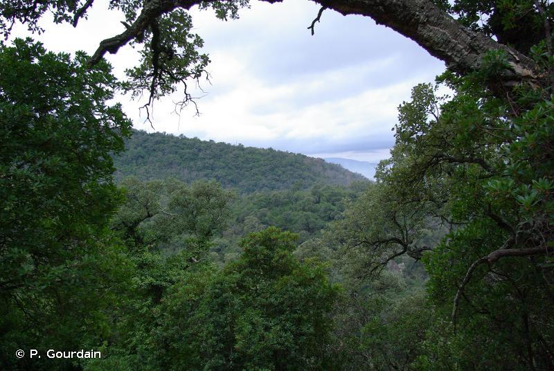 G2.1 - Forêts de <em>Quercus</em> sempervirents méditerranéennes - EUNIS