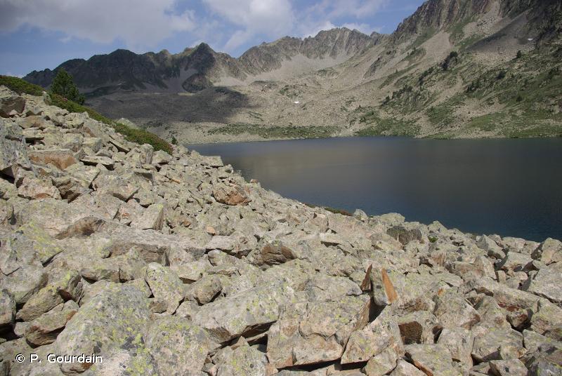 H2.3 - Éboulis siliceux acides des montagnes tempérées - EUNIS