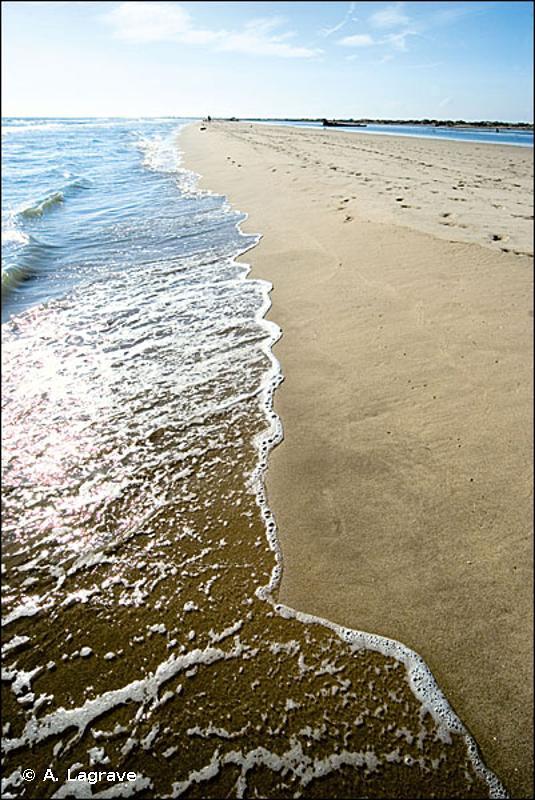 16.1 - Plages de sable - CORINE biotopes