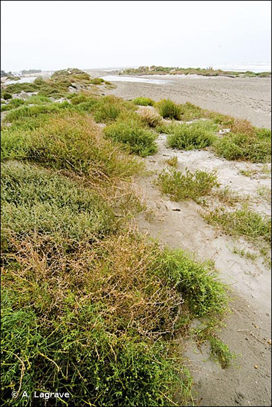 B1.2 - Plages sableuses au-dessus de la laisse de mer - EUNIS