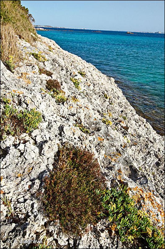 18.22 - Groupements des falaises méditerranéennes - CORINE biotopes