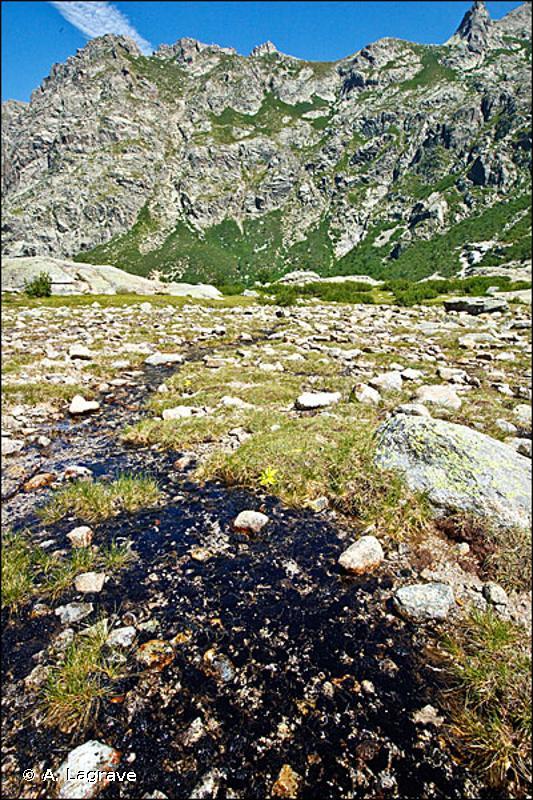 24.41 - Végétation des rivières oligotrophes acidiphiles - CORINE biotopes