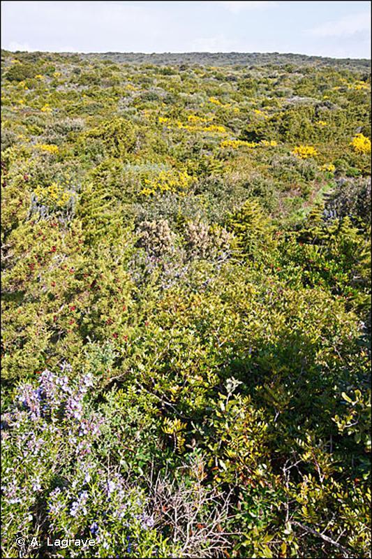 32.21I - Brousses thermo-méditerranéennes à Genévriers - CORINE biotopes