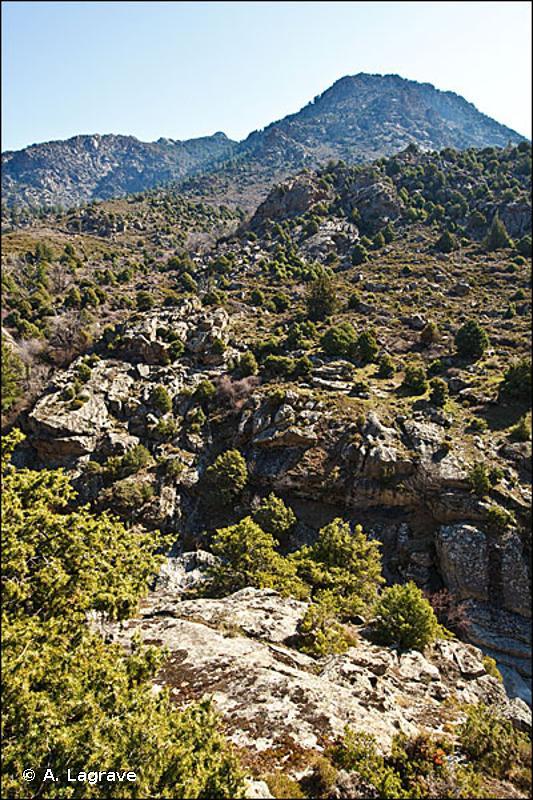 32.1311 - Matorral arborescent interne à Juniperus oxycedrus - CORINE biotopes