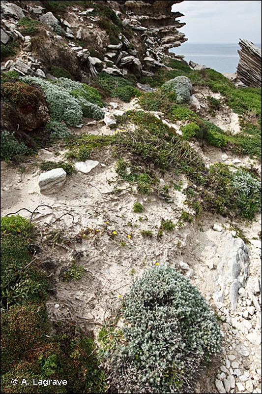 5410-3 - Garrigues et pré-maquis des falaises littorales thermo-méditerranéennes de la Corse - Cahiers d'habitats