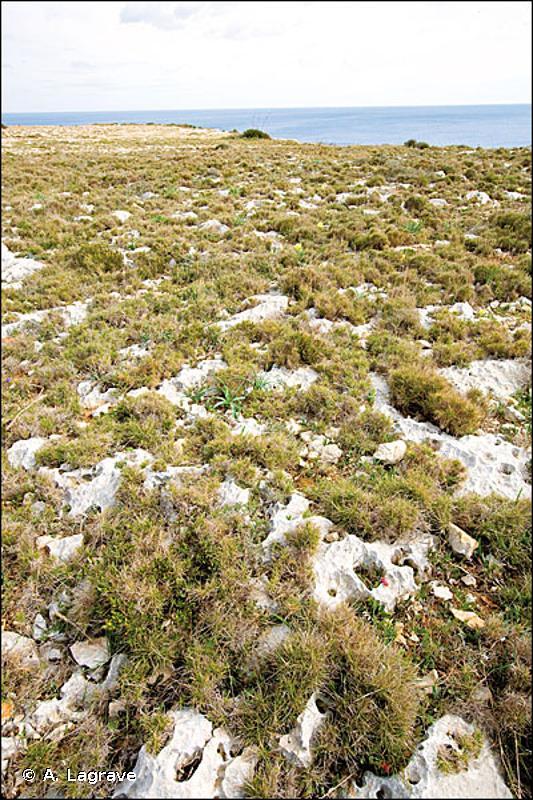 E1.263 - Pelouses médio-européennes semi-sèches à <em>Brachypodium</em> - EUNIS