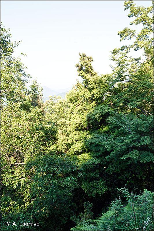 9260 - Forêts de <em>Castanea sativa</em> - Habitats d'intérêt communautaire