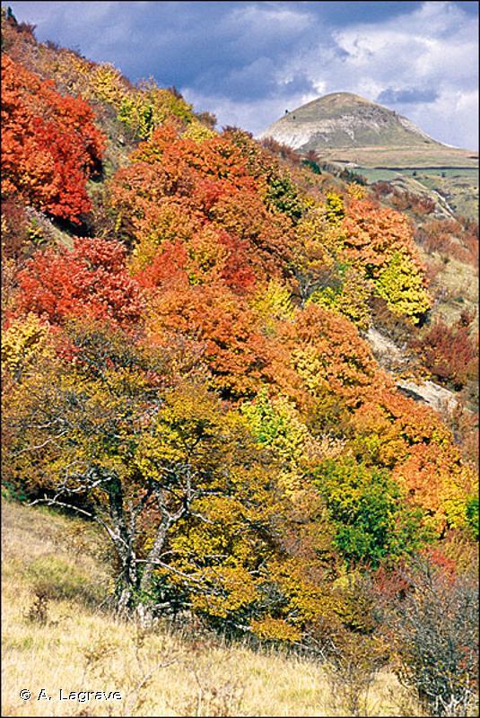 45.321 - Forêts de Chênes verts supra-méditerranéennes françaises - CORINE biotopes