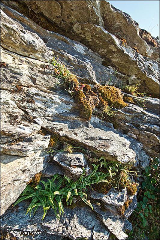 62.28 - Falaises siliceuses provenço-ibériques - CORINE biotopes