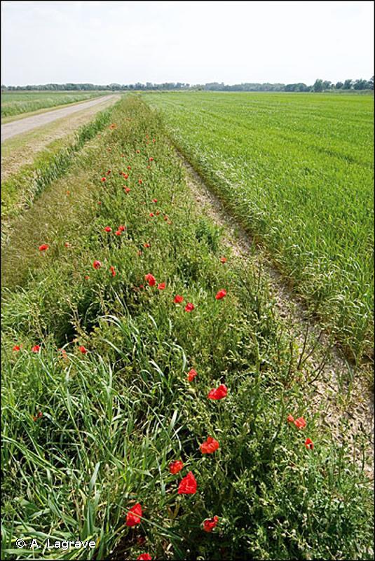 82.2 - Cultures avec marges de végétation spontanée - CORINE biotopes