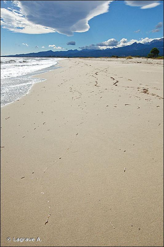 II.2.1. - Biocénose des sables médiolittoraux (SM) - Biocénoses benthiques de Méditerranée