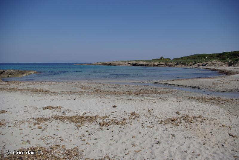 I.2.1. - Biocénose des sables supralittoraux - Biocénoses benthiques de Méditerranée