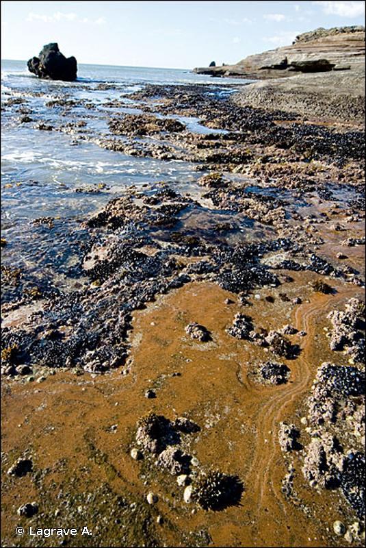 1170 - Récifs - Habitats d'intérêt communautaire
