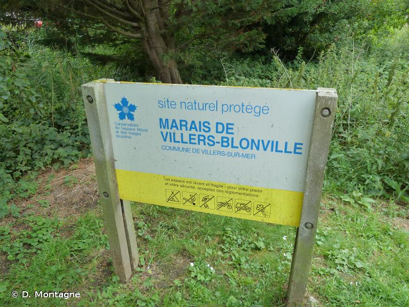 Marais De Villers - Blonville