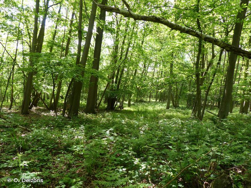 MASSIF FORESTIER D'HALATTE