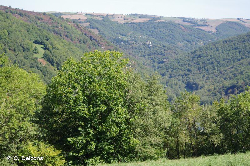 Vallée du Tarn, amont
