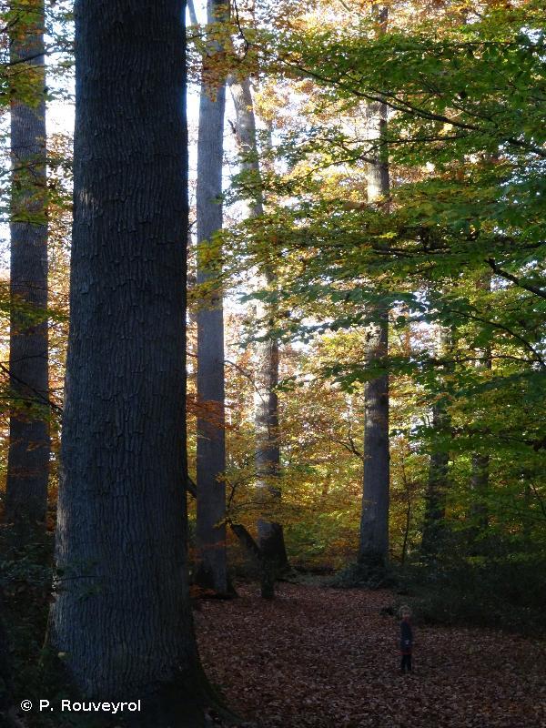 Forêt de Troncais