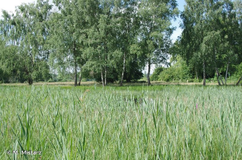 Le Marais de Saint-Gond