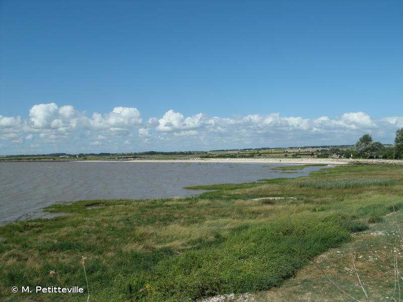 Estuaire de la Gironde : marais de la rive nord
