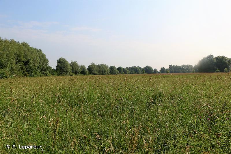 Bocage alluvial de la Grande Becque à Steenbeck et Prés du Moulin Madame à Sailly-sur-la-Lys