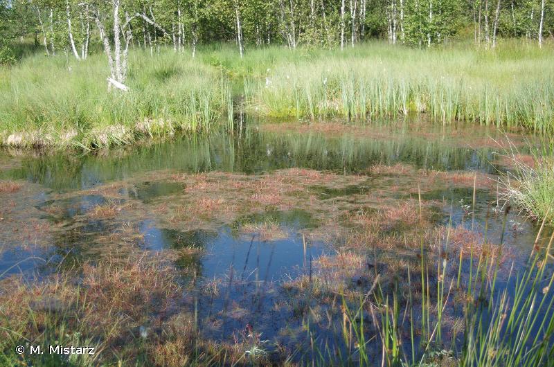 3160 - Lacs et mares dystrophes naturels - Cahiers d'habitats